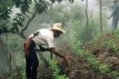 """Disponibili on line gli estratti dall'ultimo """"The World of Organic Colture"""""""