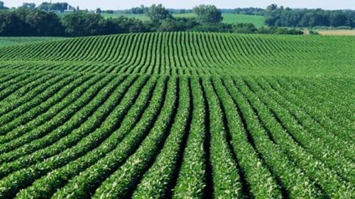 agricoltura-italia