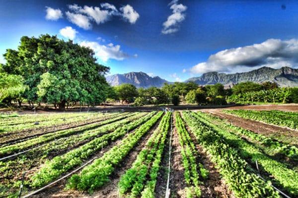 Coltivazione-di-verdura-biologica