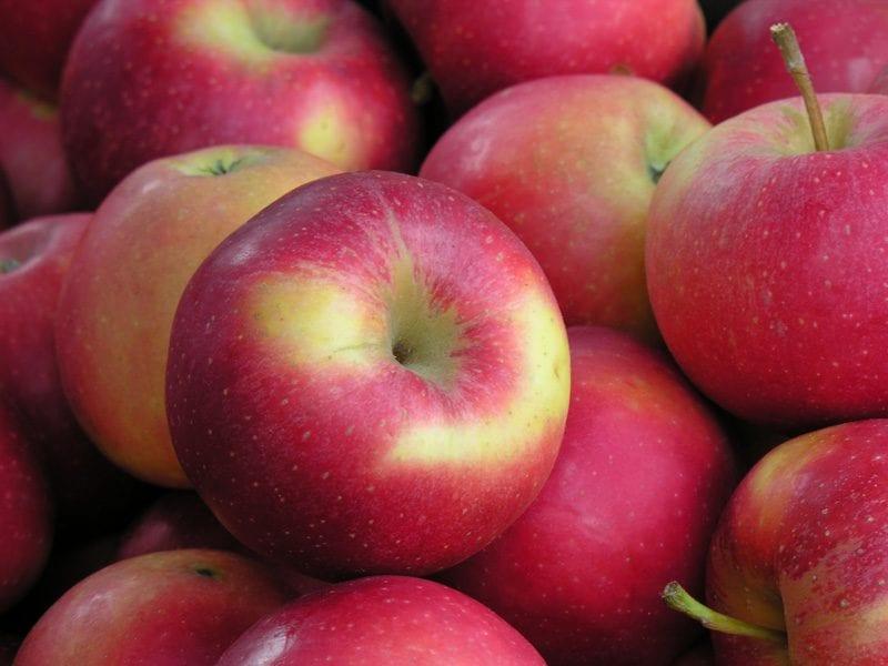 Nuova alleanza per la commercializzazione delle mele biologiche