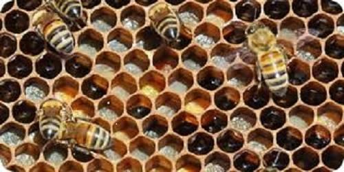 apicoltura europa