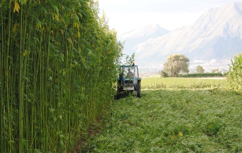 Expò Milano: seminario sulla coltivazione della canapa