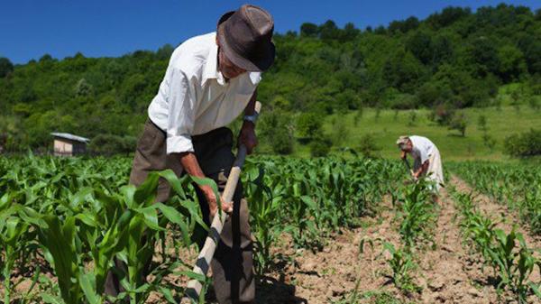 agricoltura-biologica1