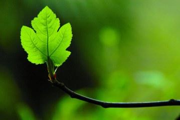 La Nota del Mipaaf sui coadiuvanti a base di oli vegetali in agricoltura biologica