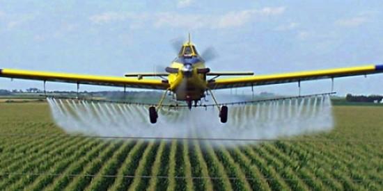 OGM colture