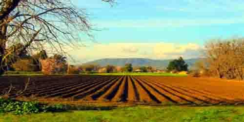 L'agricoltura biologica conviene? La risposta il 4 febbraio a Fieragricola