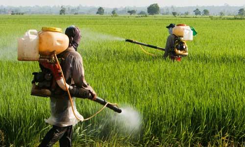 pesticidi Ses