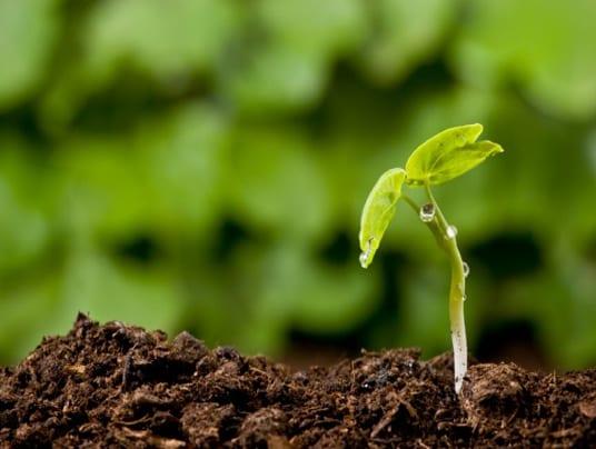 agricoltura-biodinamica-e1406537232251