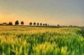 Italia prima in Europa per Valore aggiunto in agricoltura