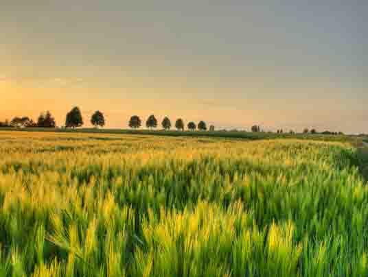 agricoltura biologica5