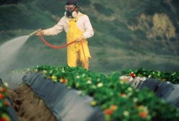 Residui di pesticidi negli alimenti: l'Italia si conferma tra i Paesi più virtuosi