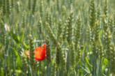 FederBio: l'agricoltura biologica e la via per raggiungere un equilibrio produttivo