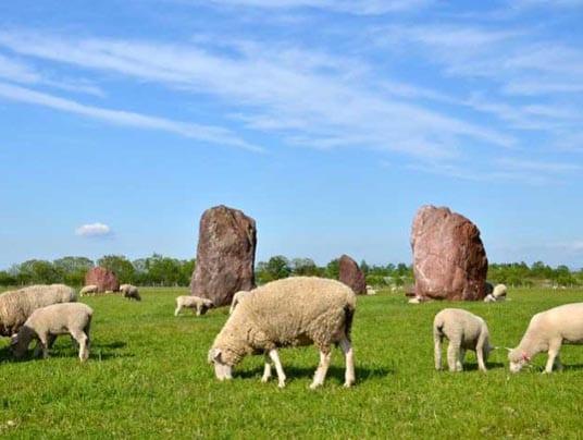 pecore bio
