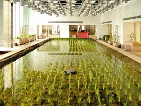 agricoltura biologica contro acquaponica scontro negli