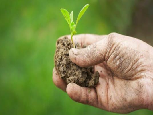 PAC: misure realmente a sostegno dell'agricoltura biologica? Il parere di IFOAM