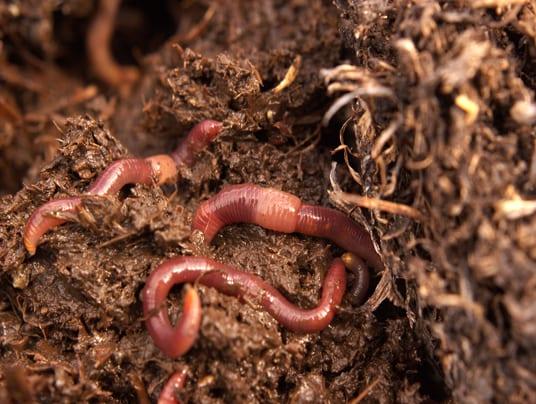 Lombricoltura conquista il biologico. Aziende di Humus in crescita in Italia