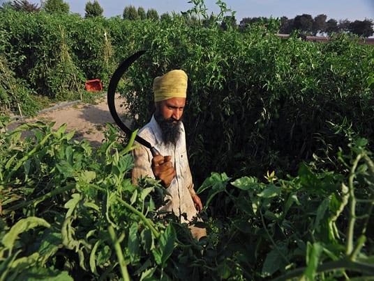 Dai pesticidi e fertilizzanti chimici all'agricoltura biologica: il miracolo indiano di Kedia