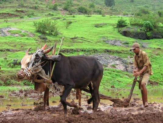 India: l'agricoltura bio 'conquista' le zone aride e contrasta il global warming