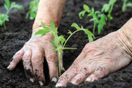 Agricoltura biologica: la Commissione approva il testo unico