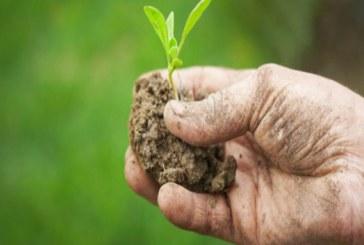 Rullo pacciamante in agricoltura bio: uno strumento utile?