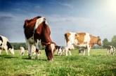 Allevamenti bio: IFOAM apre consultazione per stabilire criteri chiari