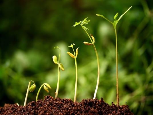 Incentivi agli agricoltori: 3 milioni di euro per difendere la biodiversità
