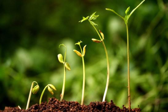 Coltivazioni bio: rame e azadiractina potrebbero essere tossici. Lo studio
