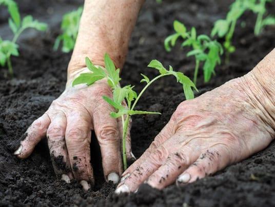 Agricoltura biologica: Spagna al primo posto in Europa
