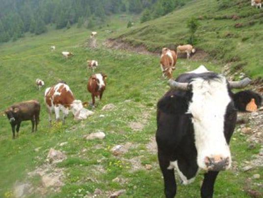 Migliori risultati per la produzione biologica rispetto ai loro omologhi convenzionali