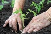 Agricoltura biologica senza rame: è possibile? Convegno a Roma il prossimo 14 giugno