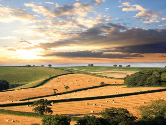 Friuli Venezia Giulia: 7 milioni per l'agricoltura bio in Regione