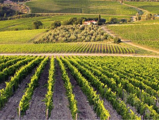 Offerta formativa per le aziende agricole Toscana