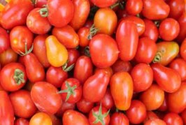 La coltivazione del pomodoro da industria bio: aspetti agronomici e tematiche legate alla certificazione