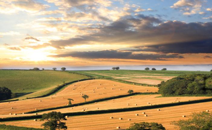 Primo insediamento in agricoltura: al via bando per 65 milioni di euro