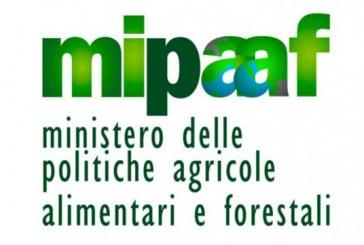 Mipaaf: 485 milioni di euro per garanzie in agricoltura e agroindustria