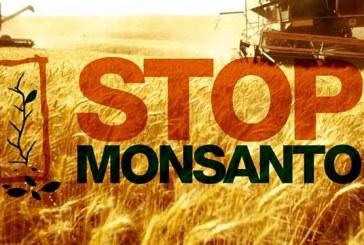 """Tribunale Monsanto: """"La multinazionale è colpevole di ecocidio"""""""