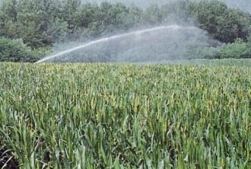 Da Israele la soluzione anti-siccità: l'irrigazione a goccia riduce gli sprechi del 60%