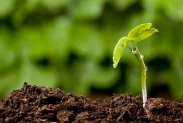 Produzione biologica: arriva il sì della commissione Agricoltura in Senato