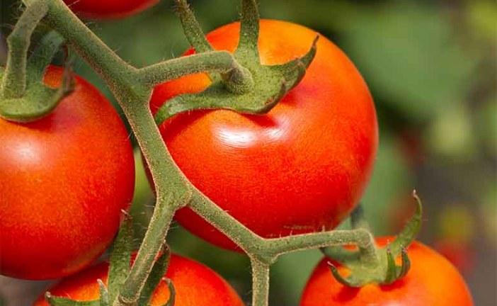 Origine del pomodoro: arriva con decreto l'obbligo in etichetta