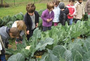 Orto a scuola: la regione Marche promuove l'agricoltura bio in classe