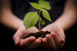 I benefici dell'agricoltura biologica sulla biodiversità