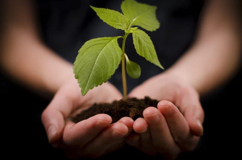 Agricoltura bio: ESPP e IFOAM insieme per trattare l'utilizzo dei prodotti nutrizionali riciclati