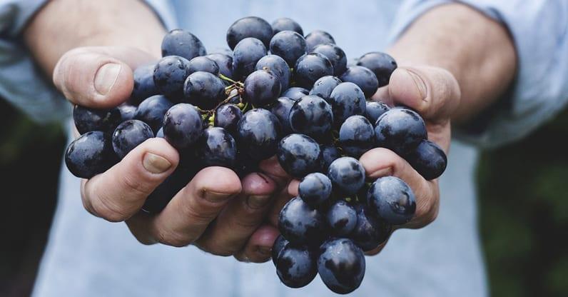 Convegno sulla viticoltura sostenibile dell'Umbria all'Istituto Agrario di Todi