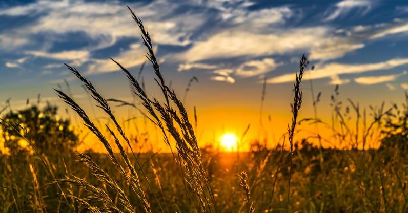 Crescita delle superfici coltivate a biologico