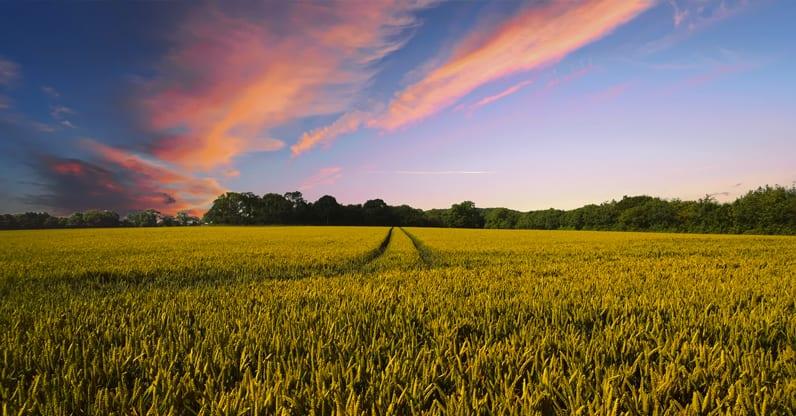 In Europa e Stati Uniti trend positivi dei prodotti bio fino al 2025