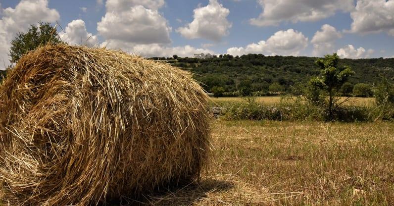 Programma di sviluppoo rurale Puglia 2014-2020
