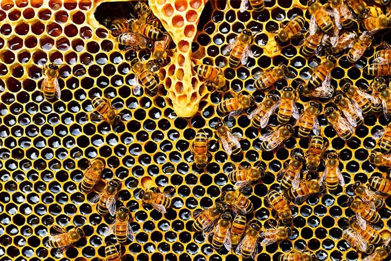 Greenpeace: «I neonicotinoidi mettono gravemente a rischio le api». L'EFSA conferma.