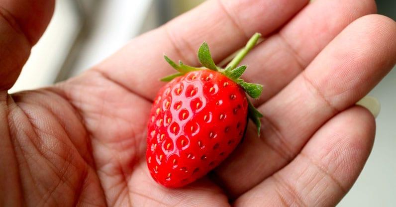 La Corte dei Conti europea passa al vaglio il sistema di controllo degli alimenti biologici