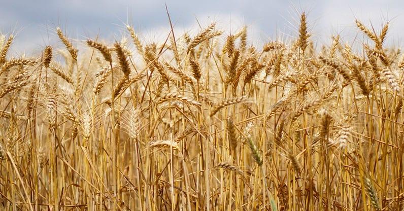 Approvato il Decreto Legislativo sui controlli nel biologico