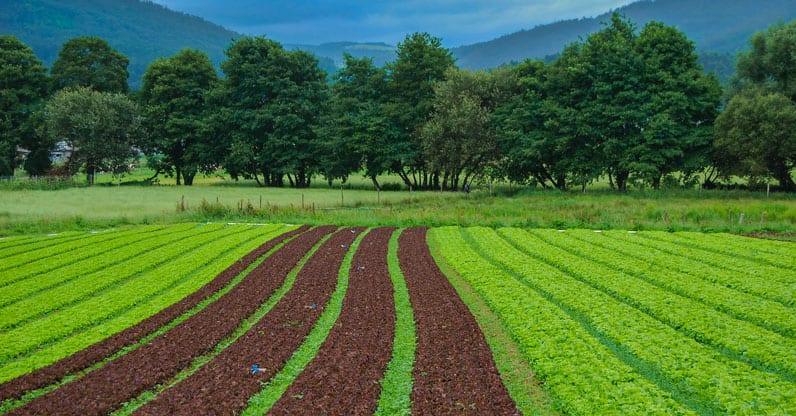 Finanziamenti per 1,1 miliardi di euro agli agricoltori francesi che vogliono passare al biologico